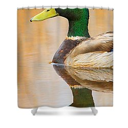 Mallard Mirror Shower Curtain