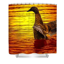 Mallard Sunset Shower Curtain