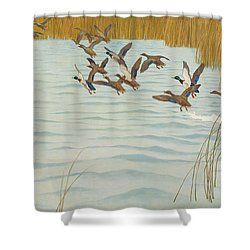 Mallards In Autumn Shower Curtain by Newell Convers Wyeth