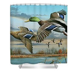 Mallards In Flight Shower Curtain