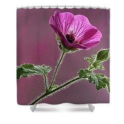 Mallow Flower 3 Shower Curtain