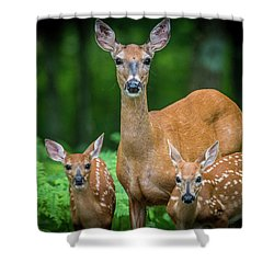 Mama And Fawns Shower Curtain