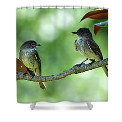 Mama And Papa Kingbird Shower Curtain