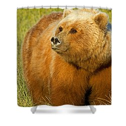 Mama Bear Shower Curtain