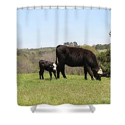 Mama Cow And Calf In Texas Pasture Shower Curtain