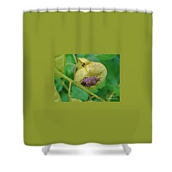 Mamorated Stink Bug On Seed Pod Summer Indiana Shower Curtain