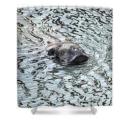 Manatee 2 Shower Curtain by Angela Murray