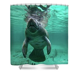 Manatee Breathing Shower Curtain