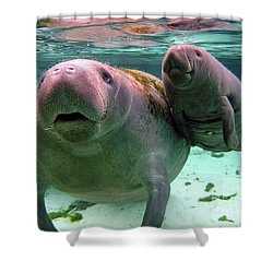 Manatee Mom And Calf Shower Curtain
