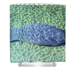 Manatee Shower Curtain