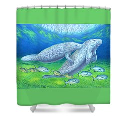 Manatee Spring Shower Curtain by Tim McCarthy