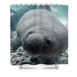 Manatee Shower Curtain