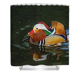 Mandarin 2 Shower Curtain by Robert Hebert