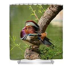 Mandarin Duck On Tree Shower Curtain