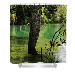 Shower Curtain featuring the photograph Mangrove Mystique 2 by Dianne  Connolly