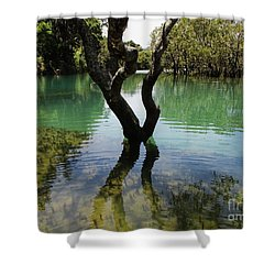 Mangrove Mystique 3 Shower Curtain by Dianne  Connolly
