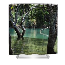 Shower Curtain featuring the photograph Mangrove Mystique by Dianne  Connolly