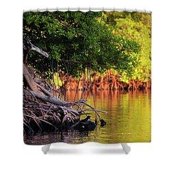 Mangroves Of Roatan Shower Curtain by Doug Sturgess
