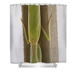 Shower Curtain featuring the photograph Mantis by Anne Rodkin