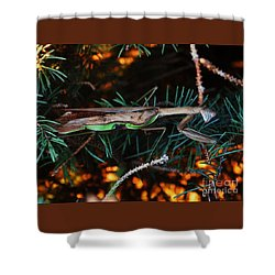 Shower Curtain featuring the photograph Mantis  by J L Zarek
