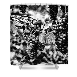 Many Grapes Shower Curtain