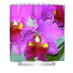 Many Purple Orchids Shower Curtain by Lehua Pekelo-Stearns
