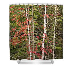 Shower Curtain featuring the photograph Maple Birch by Peter J Sucy