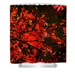 Shower Curtain featuring the photograph Maple Dance In Red by Paul Cammarata