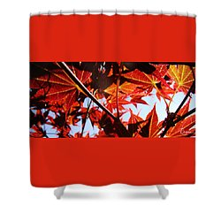 Maple Fire Shower Curtain