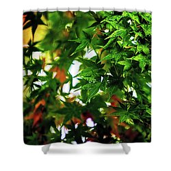 Maple In The Mist Shower Curtain by Mark Lucey
