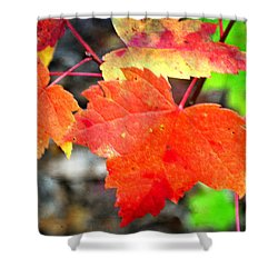 Shower Curtain featuring the photograph Maple Leafs Ablaze by Marty Koch