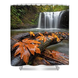 Maple Leaves On Tree Log At Hidden Falls Shower Curtain