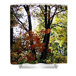 Maple Mania 16 Shower Curtain by Will Borden