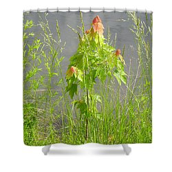 Maple On Lake Shower Curtain