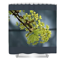 Maple Tree Flowers 2 - Shower Curtain
