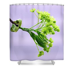 Maple Tree Flowers Shower Curtain