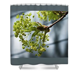 Maple Tree Flowers - Shower Curtain