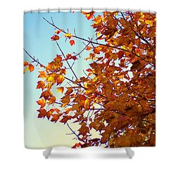 Maple Tree In October Shower Curtain