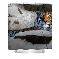 Mara Shower Curtain by Lori Deiter
