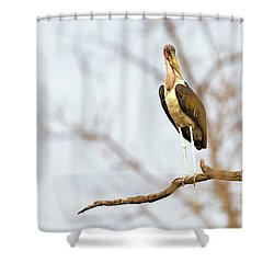 Marabou Stork In South Africa Shower Curtain