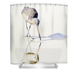 Marbled Godwit Times Three Shower Curtain