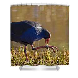 March Of The Swamphen Shower Curtain by Mike  Dawson