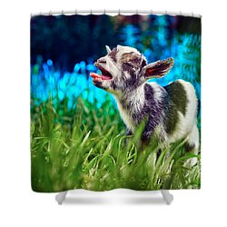 Baby Goat Kid Singing Shower Curtain by TC Morgan