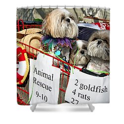 Mardi Gras Pekingese Pups Shower Curtain by Kathleen K Parker
