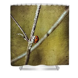 Marienkaefer - Ladybird Shower Curtain