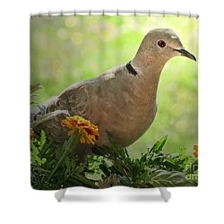 Shower Curtain featuring the photograph Marigold Dove by Debbie Portwood