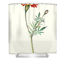 Shower Curtain featuring the painting Marigold by Heidi Kriel