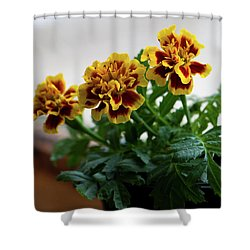 Marigold In Winter Shower Curtain by Jeff Severson
