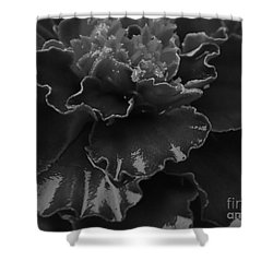 Shower Curtain featuring the photograph Marigold by J L Zarek