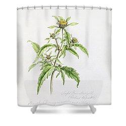Marigold Shower Curtain by WJ Linton